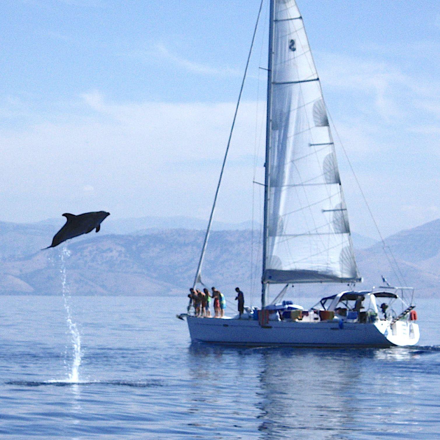 [:sv]Hoppande delfin[:]